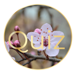 Button_Quiz